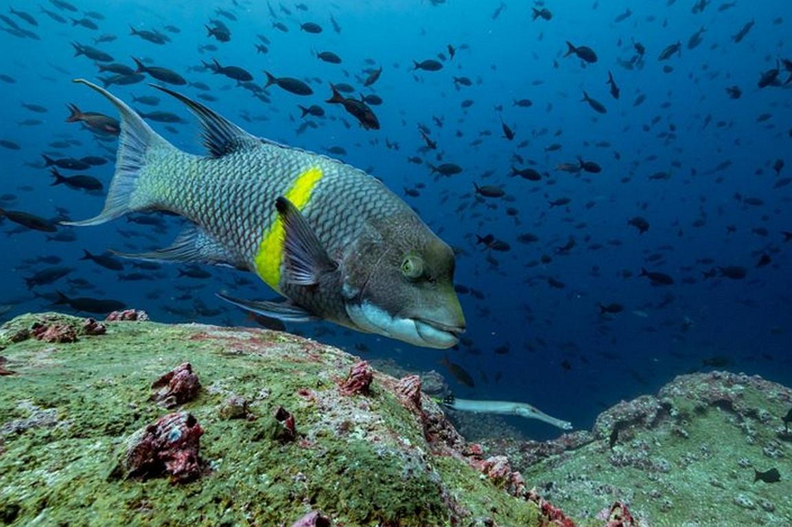 SOS auf den Galapagos Inseln