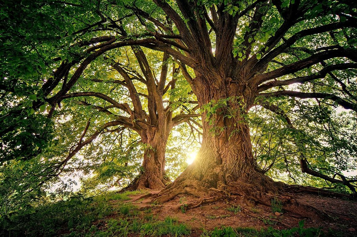 Energie wächst auf den Bäumen