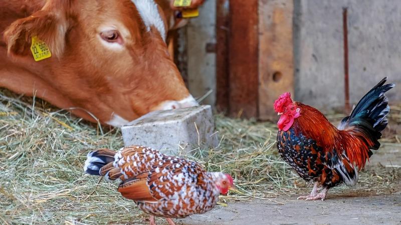 Verlust der biologischen Vielfalt durch Nahrungsmittel