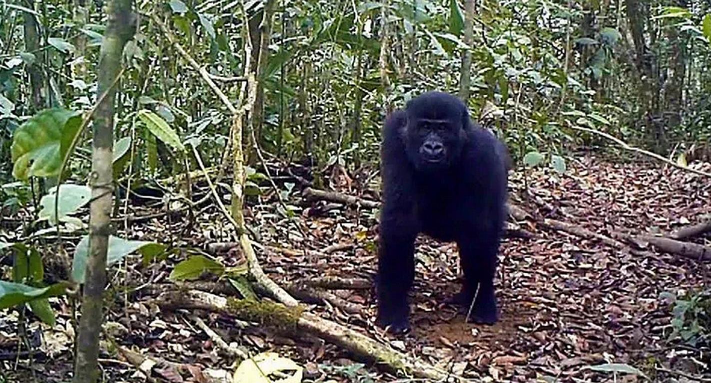 Kamerun: Nach Protest darf Tropenwald weiterwachsen