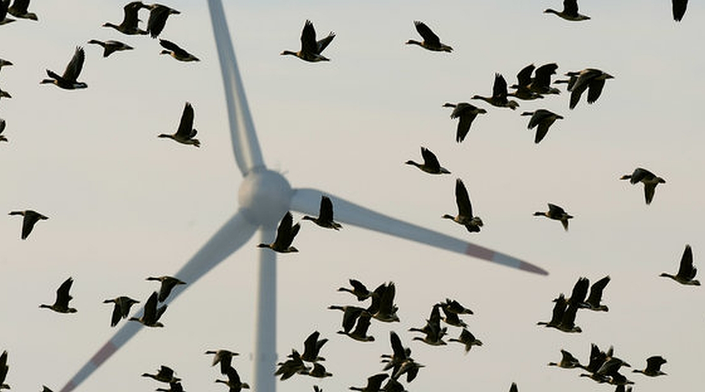 Windkraft: Schwarze Farbe rettet Vogel-Leben