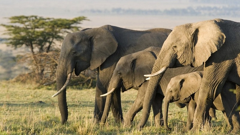 Baby-Boom bei Kenias Dickhäutern