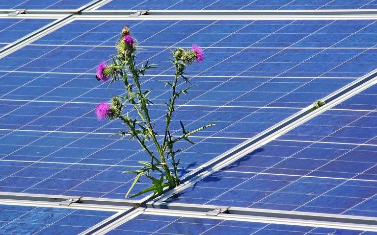 Solarworld-Revival mit Schweizer Investor