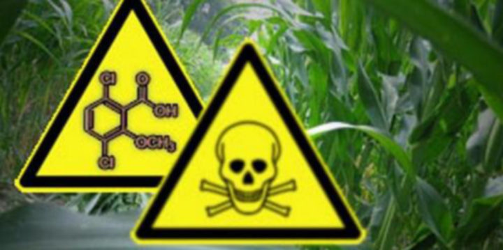 Brasilien erlaubt Herbizit Dicamba