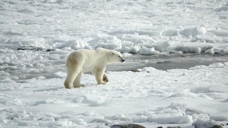 Was der Eisverlust in der Arktis für uns bedeutet