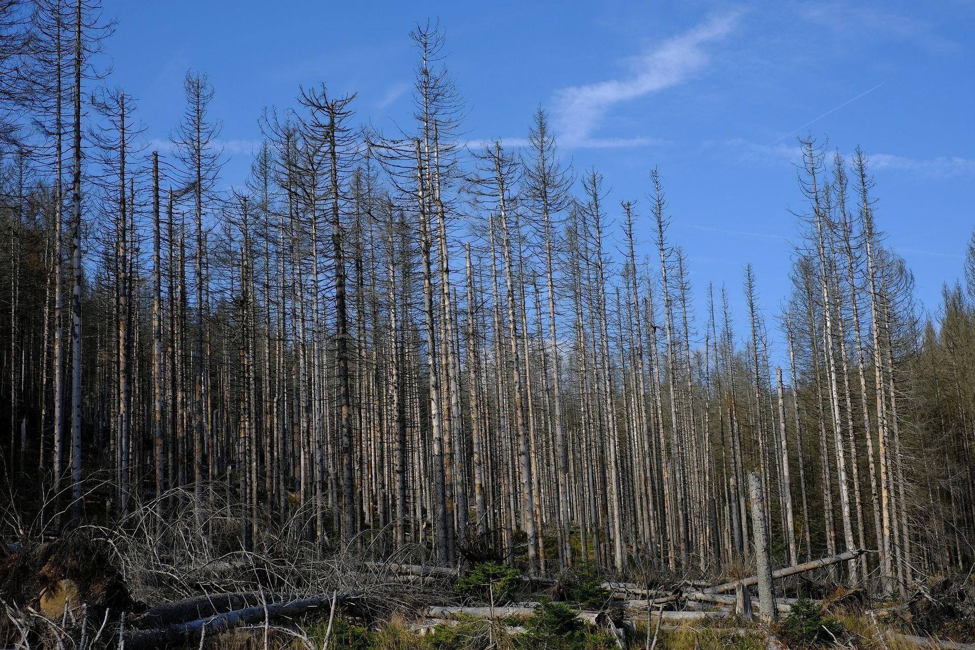 Dem Wald geht's schlechter als gedacht