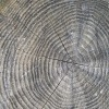 Baumringe wood 423405 1920 Simon dArcy Picabay CC PublicDomain