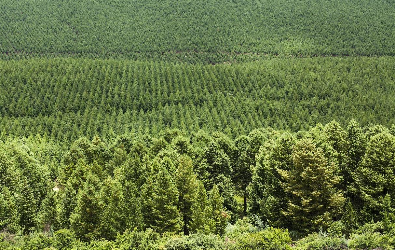 Holz aus 100 Prozent nachhaltigen Quellen