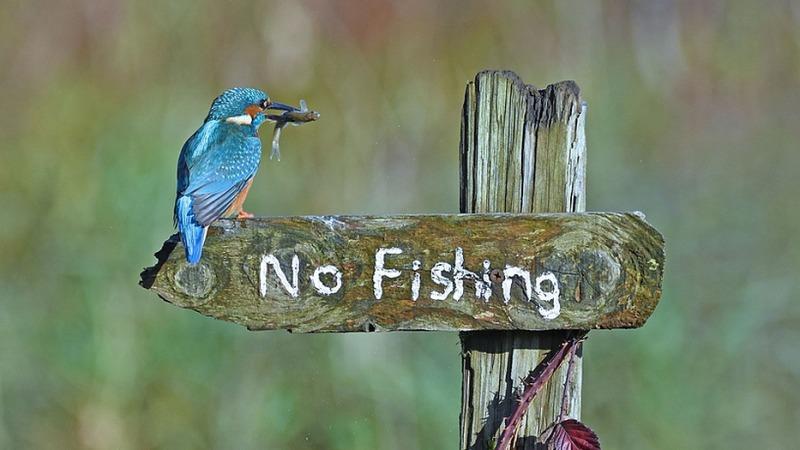 Mit Witz gegen die Zerstörung der Natur