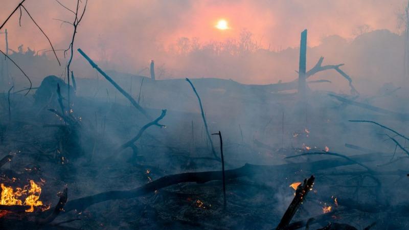 Für Leder in deutschen Autos stirbt der Regenwald