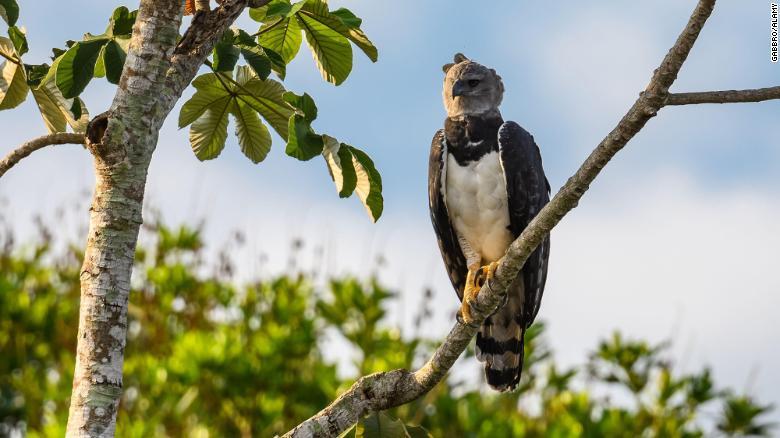 amazon deforestation wildlife exlarge 169