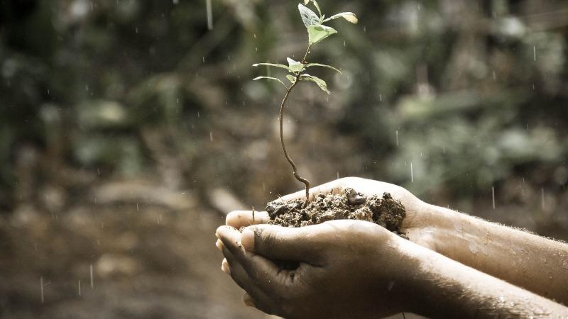 Umweltverbände diskutieren Rahmen für nachhaltige Bioökonomie
