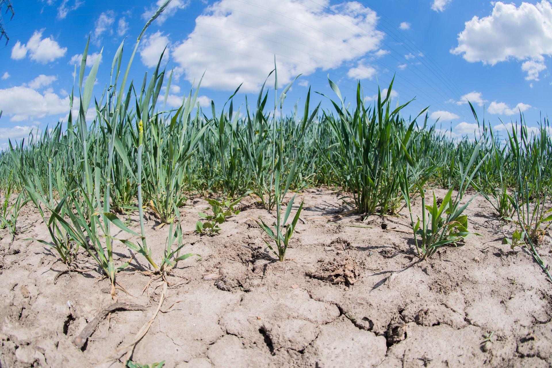 Deutschland und der Klimawandel