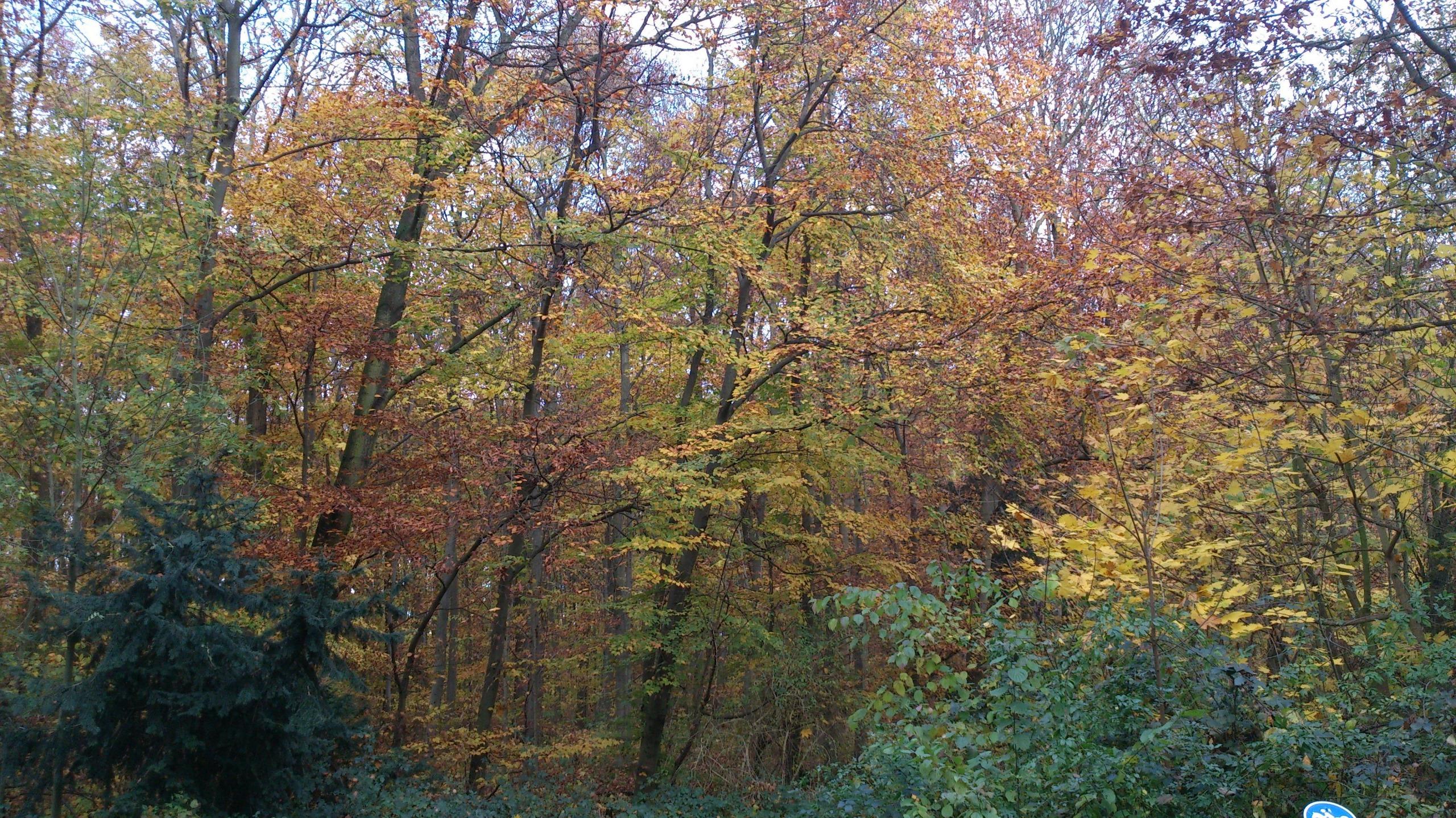 Neuer Rettungsplan für Europas Wälder