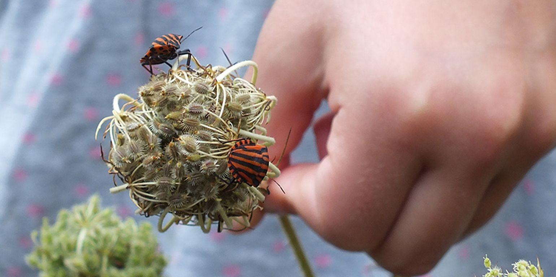 Insekten im eigenen Garten schützen