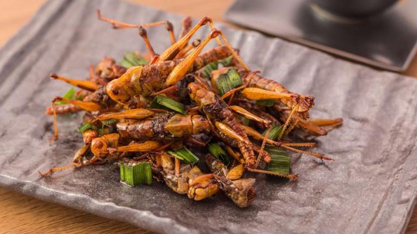 Insekten als Nahrung: Kennzeichnung verbessern