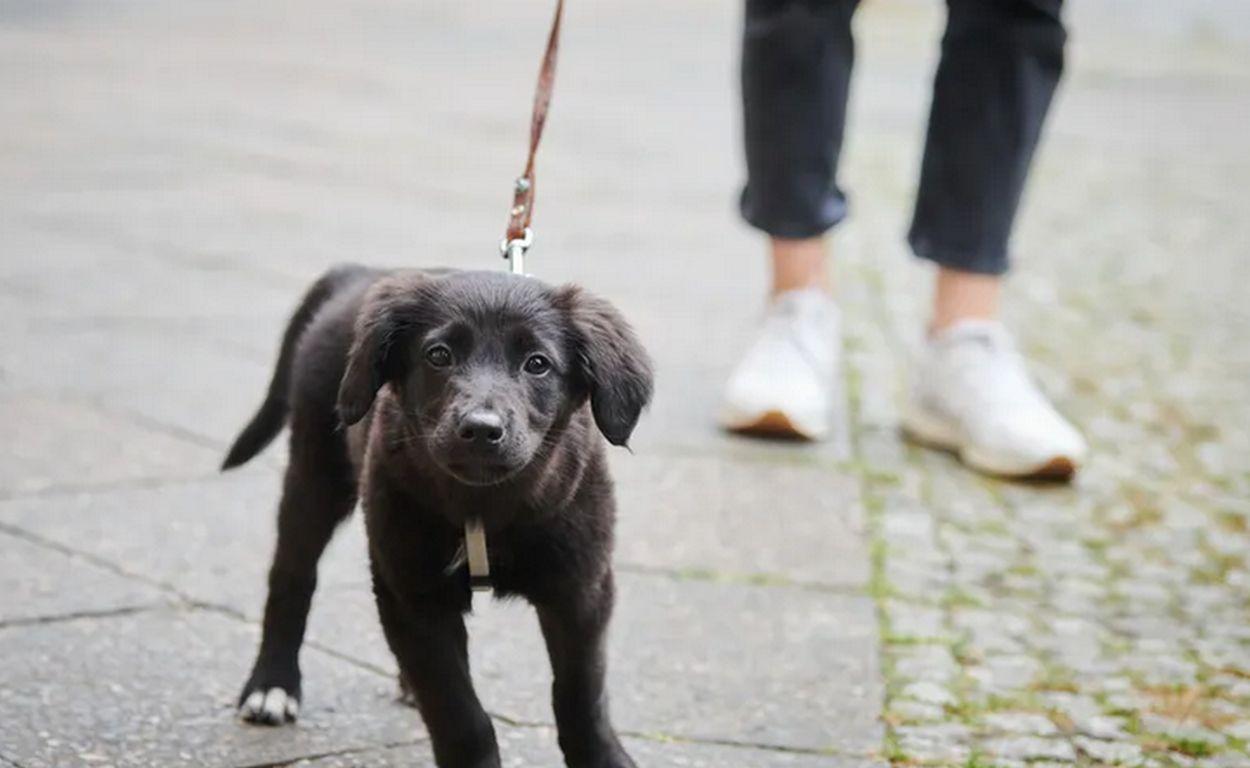 Studie: So umweltschädlich ist Hundehaltung