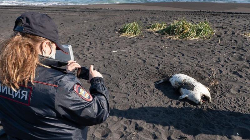 Massen-Tiersterben in Ost-Russlands gibt Rätsel auf