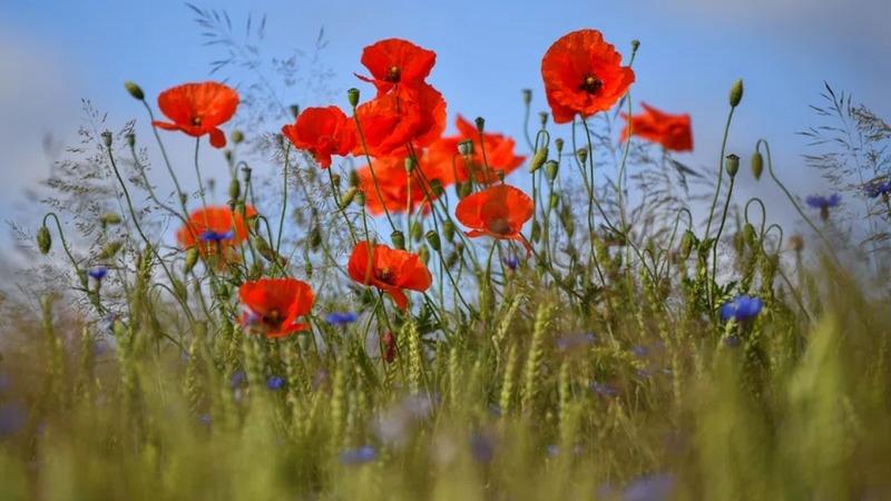 EU einig über Agrar-Reform