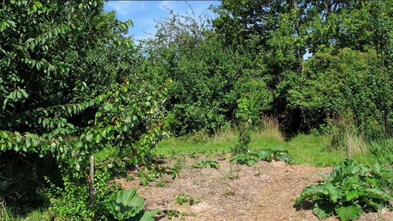 Waldgärten statt artenarmer Monokulturen