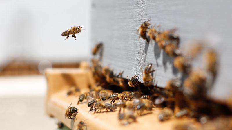 Frankreichs Verbot bienenschädlicher Pestizide war rechtens