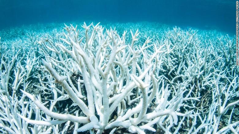 coral bleaching 03 exlarge 169