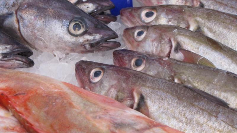 Neue Fangquoten für die Ostsee