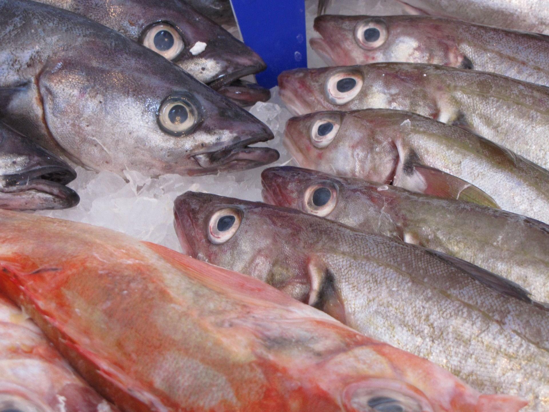 EU, Norwegen und UK einigen sich auf Fischfangmengen