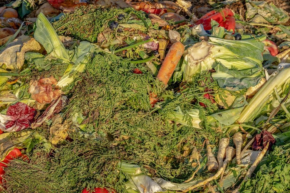 EU-Strategien gegen Lebensmittel-Verschwendung