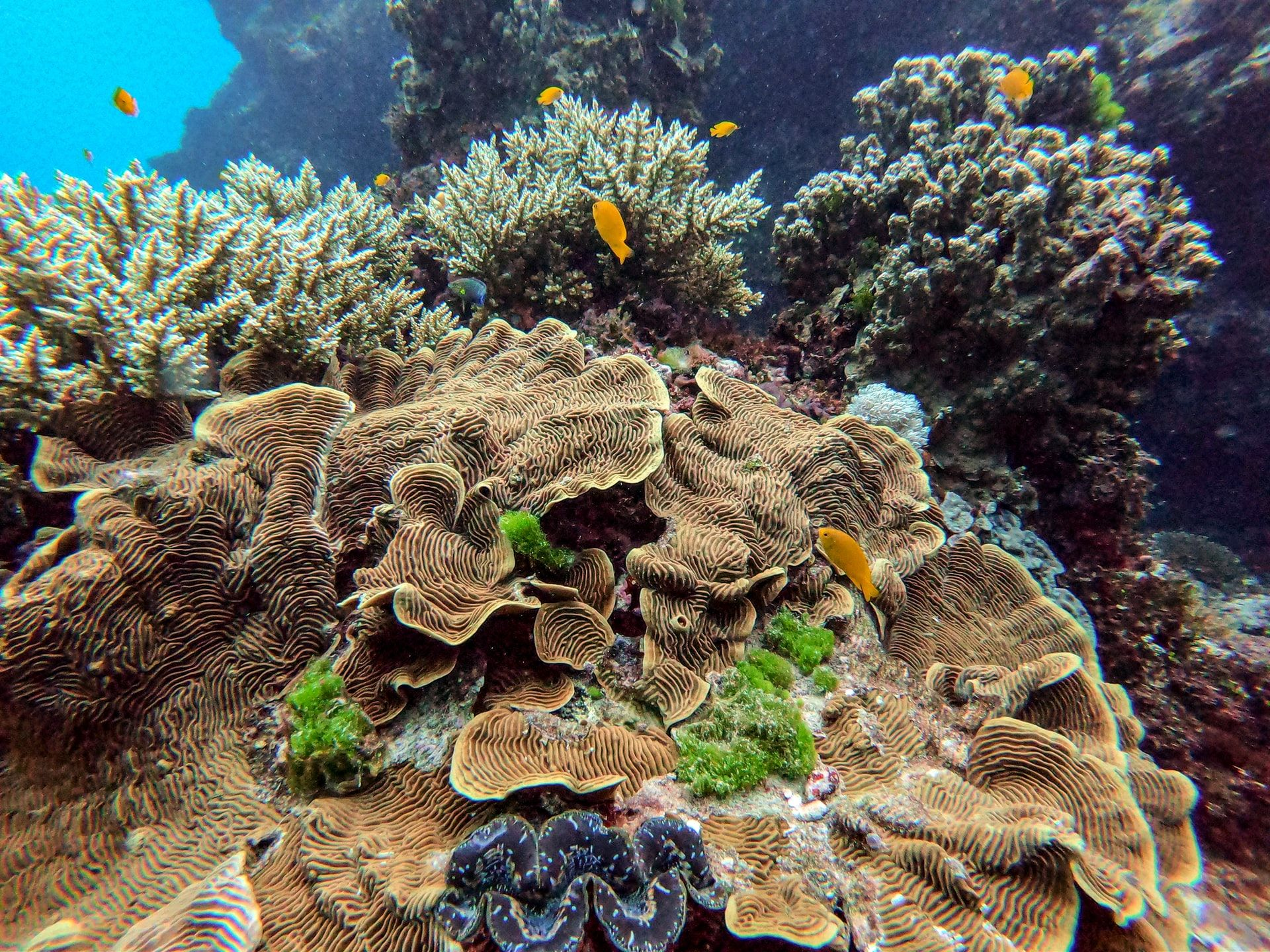 Mehr als 500m hohes Korallenriff entdeckt