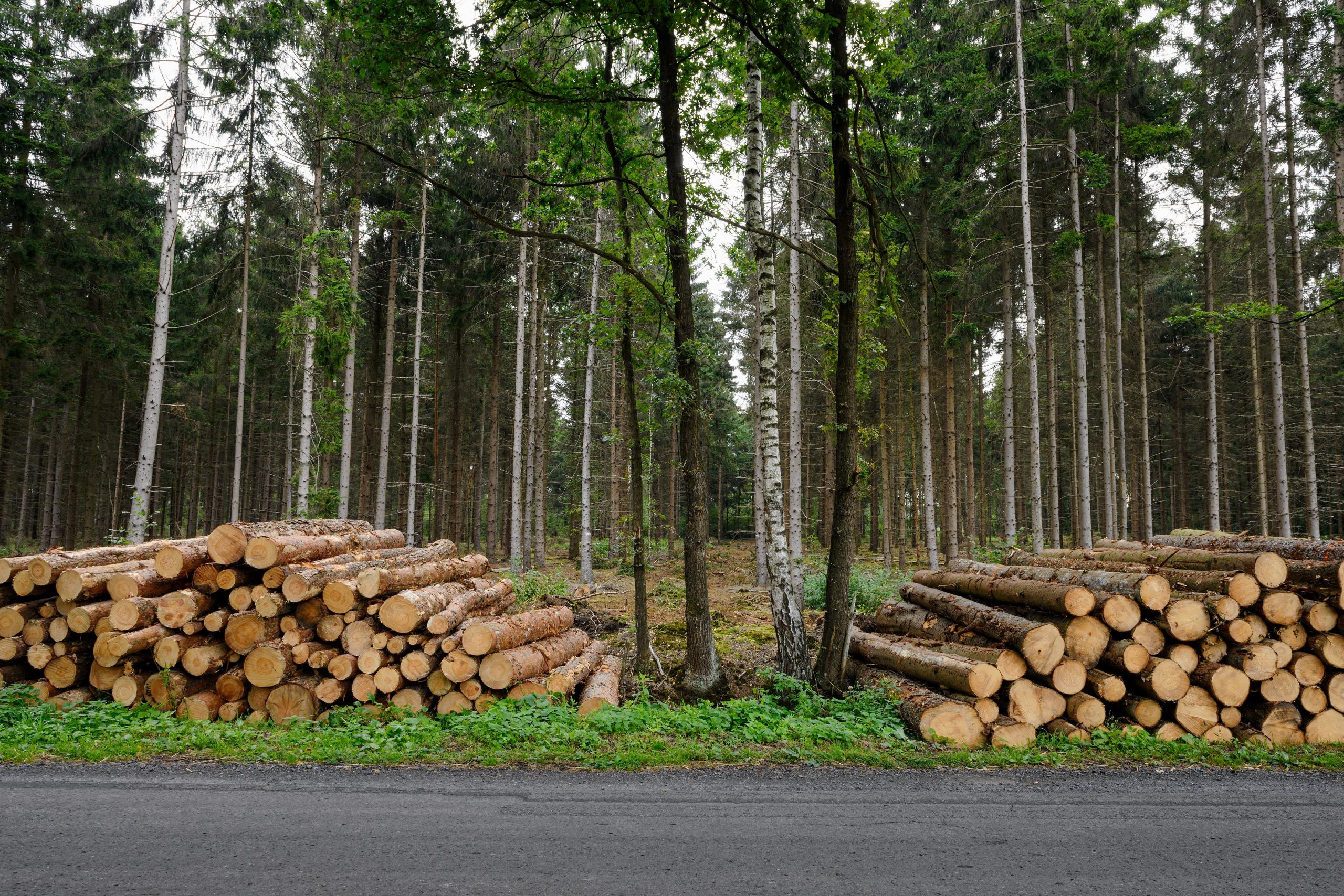 Mit Holz bauen für den Klimaschutz