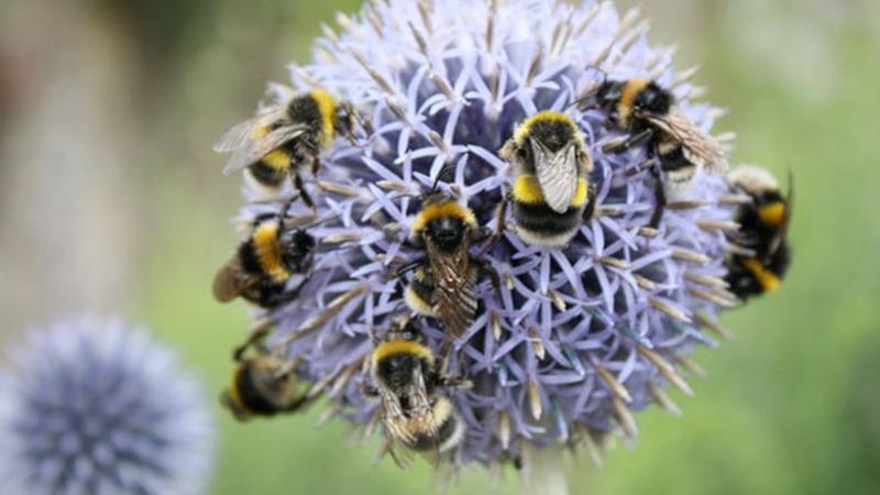 Was die Volkswirtschaft mit Insekten verdient