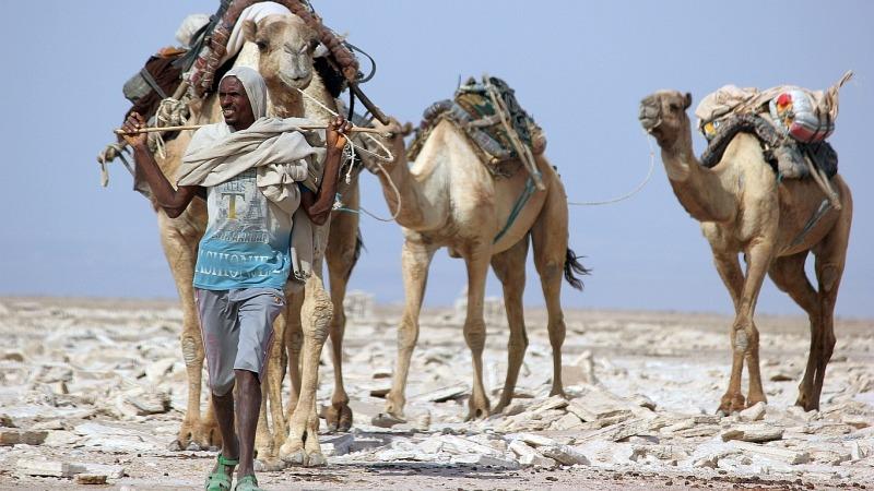 Wie Kamele: Kühlen ohne Strom