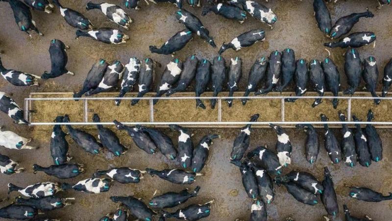 Britannien: Geld für Bauern nur noch bei Klimaschutz