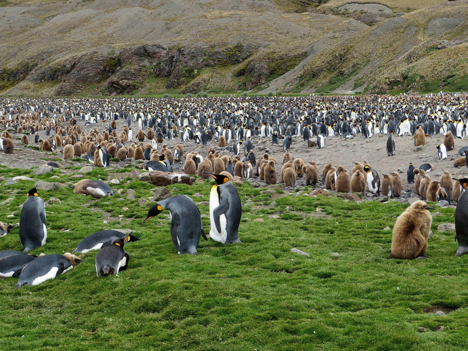 Riesiger Eisberg bedroht Pinguin-Kolonien
