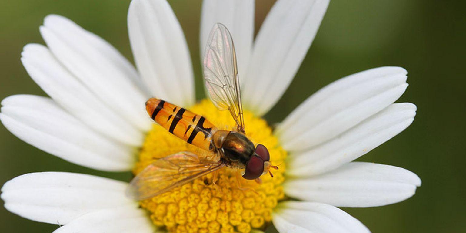 Mehr Insekten in Gärten und auf öffentlichem Grün