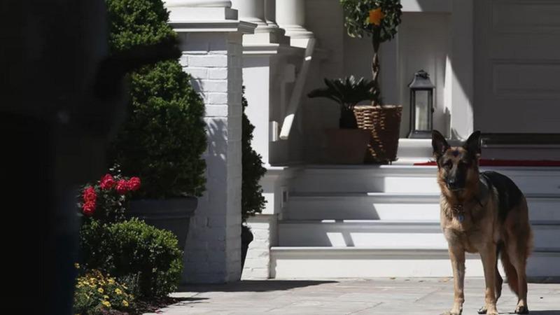 """Tierfreund Biden: Mit """"Major"""" ins Weiße Haus"""