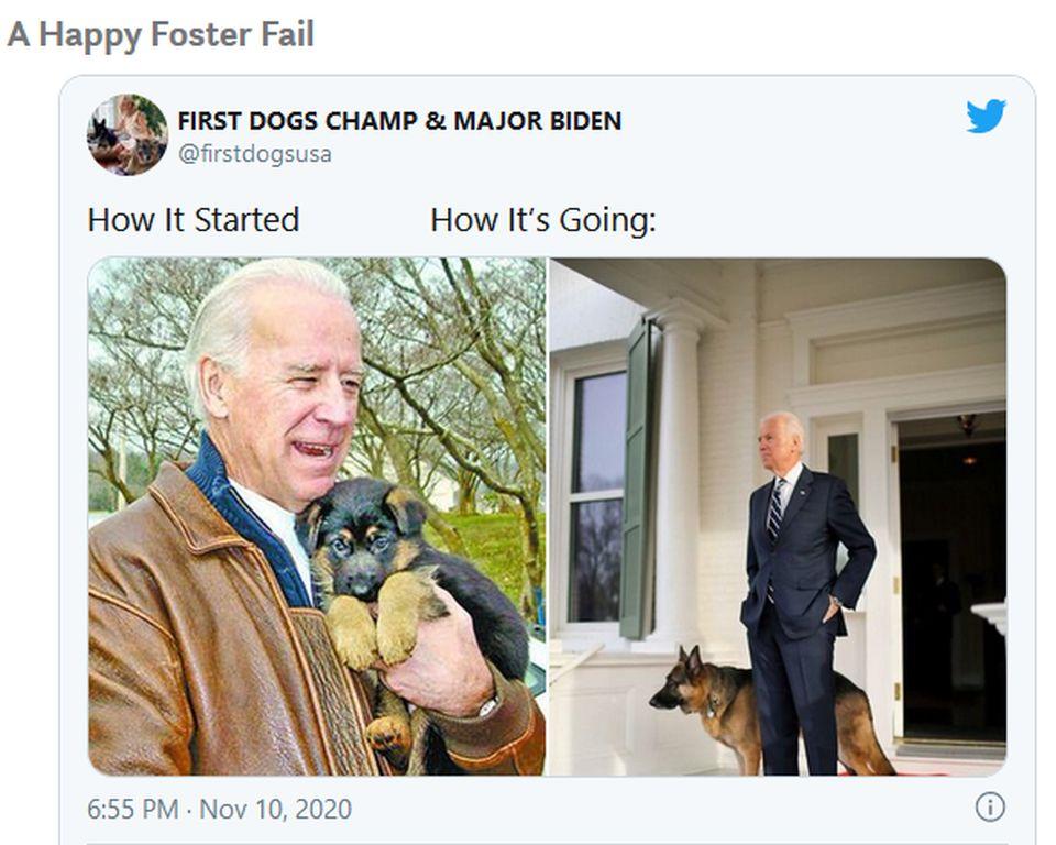 Joe Bidens Hunde Screenshot Twitter