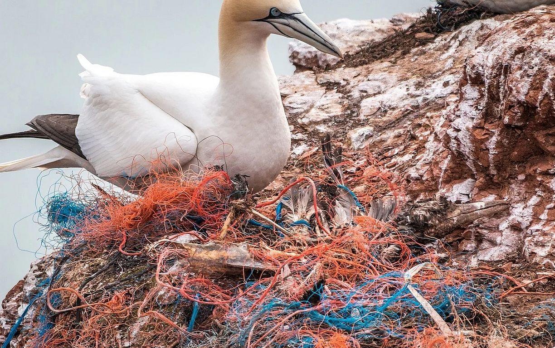 Mehr Plastik als Tiere