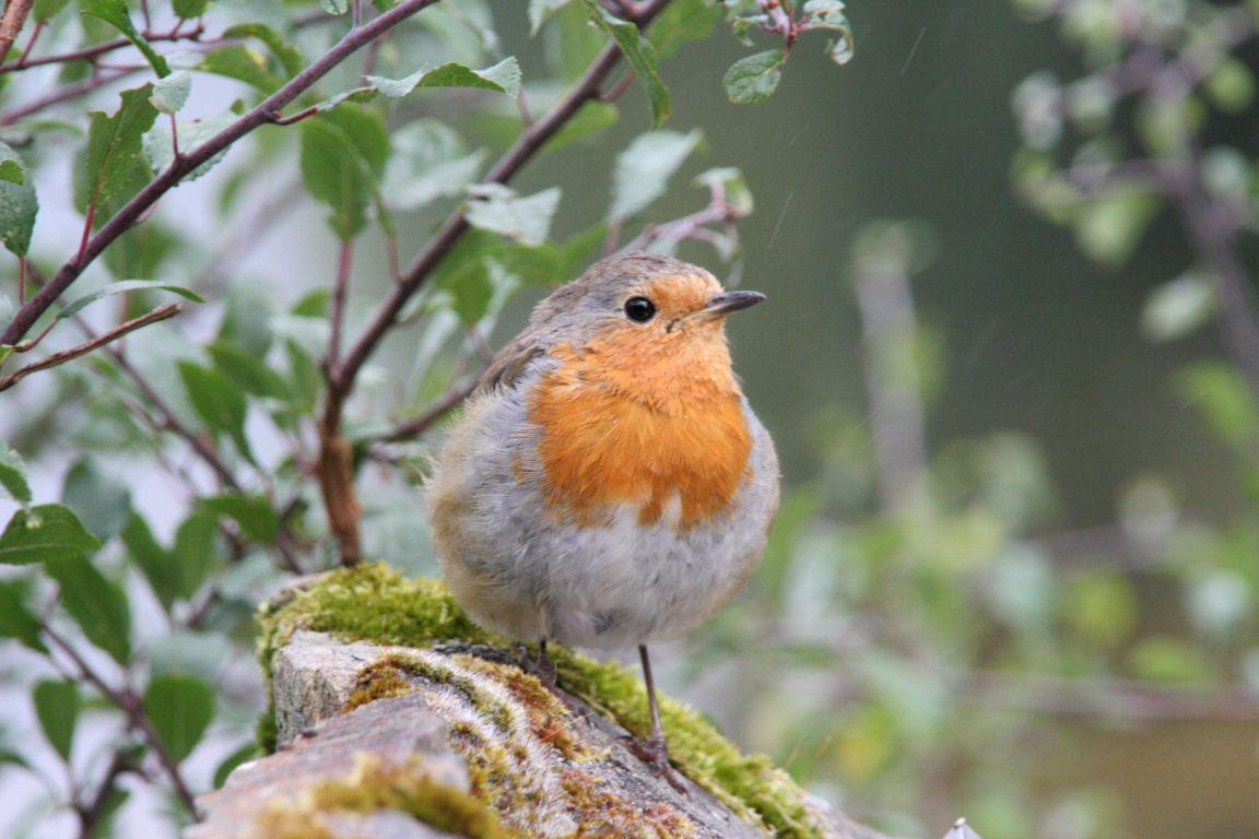 Mehr Vogelarten stimmen uns so gut wie mehr Geld
