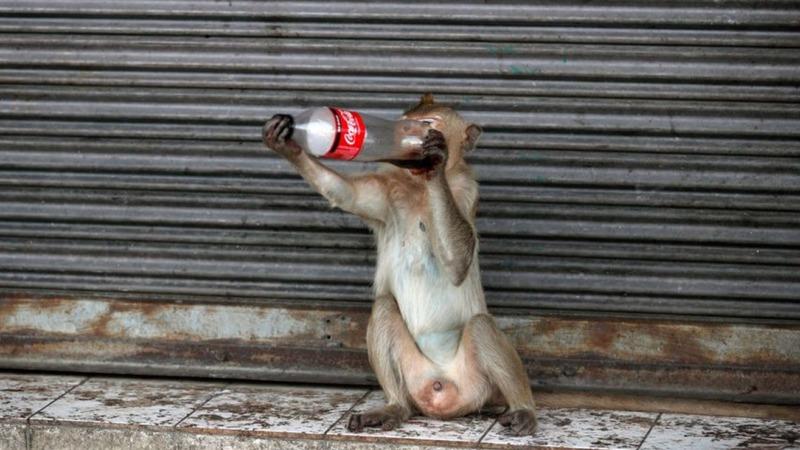 Coca-Cola verschmutzt Erde mit Plastikmüll