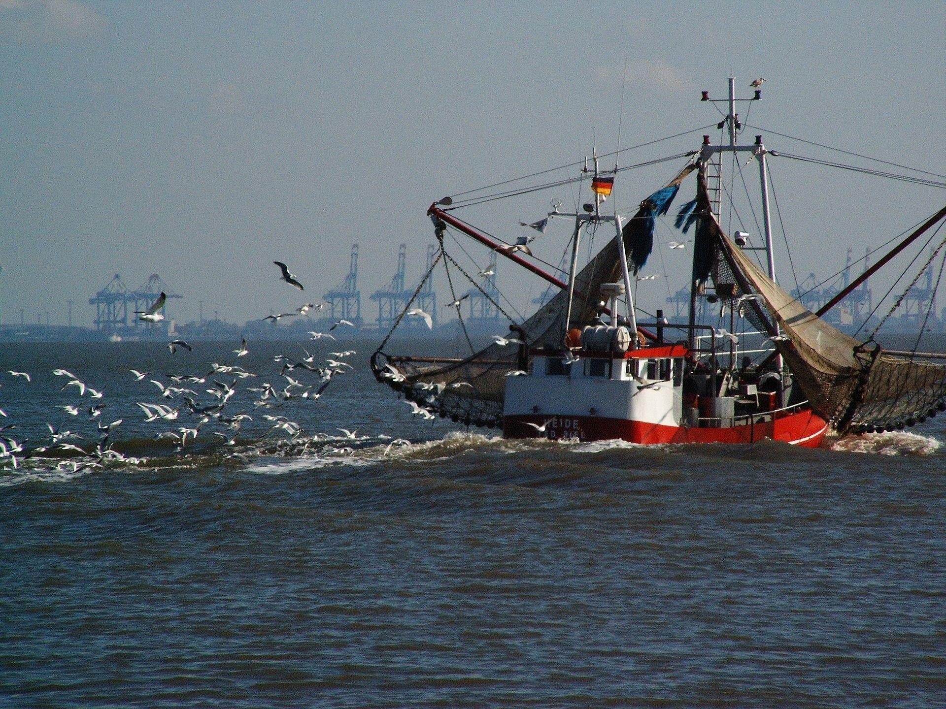 Vorerst weniger Fischfang in der Nordsee