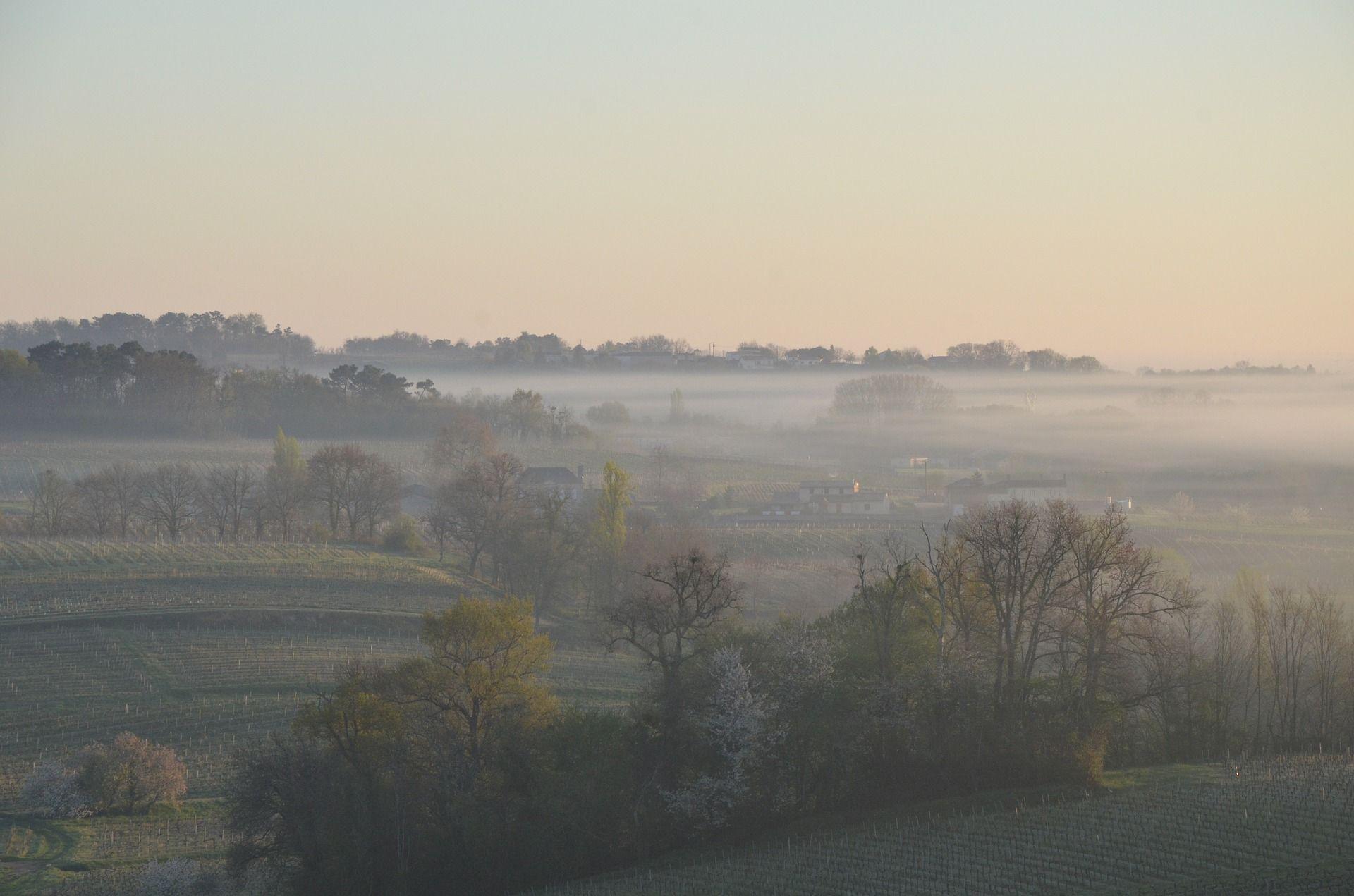 Pestizide auch in Bordeaux-Weinen
