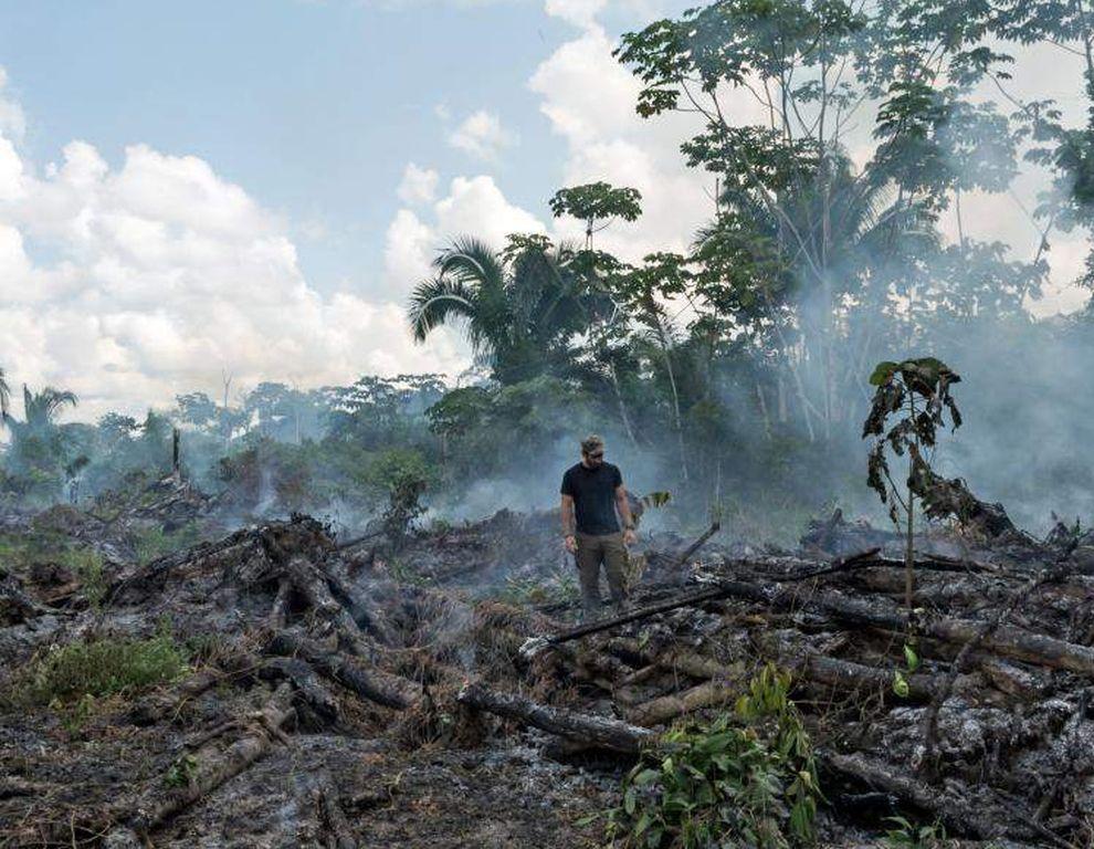 Wir tragen Mitschuld am dramatischen Waldverlust