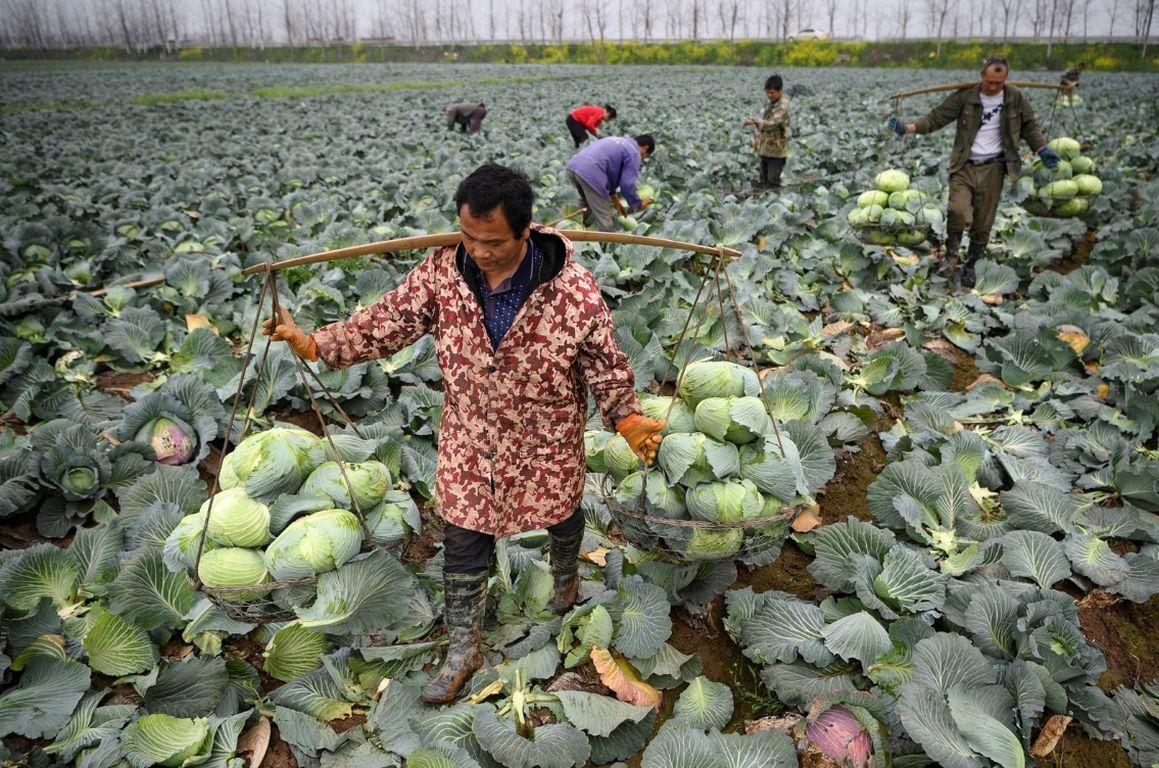Lebensmittel verschwenden: So reagieren andere Länder