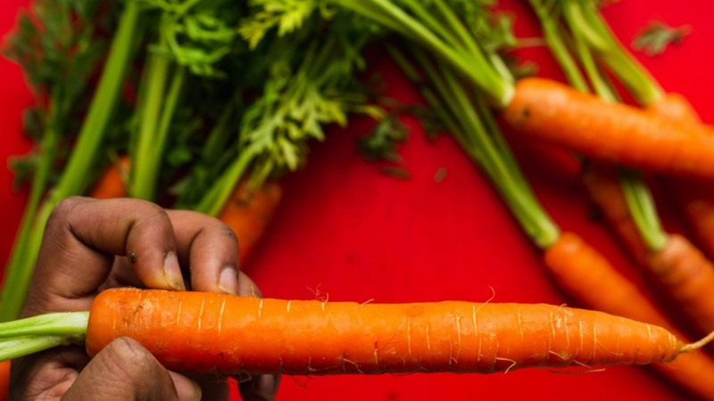 Mit Karotten wird Beton klimafreundlicher