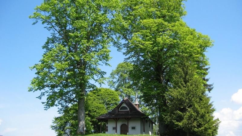 Linde ist Baum des Jahres 2021 in Österreich