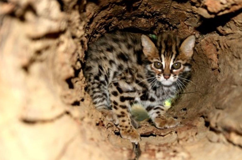 China: Besserer Schutz wilder Tiere