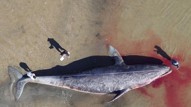 Wale vor Mexiko verhungern