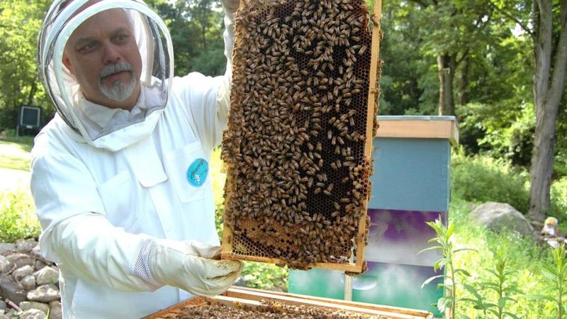 Über eine Milliarde Bienenvölker in Deutschland
